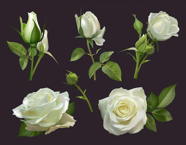 Realistischer rosenstrauß. weiße rosenblumen mit blättern, blumenrosensträußen, gartenpastellfarben blühen bündelillustrationssatz. nahaufnahme natürlicher botanischer elemente für hochzeitskarte