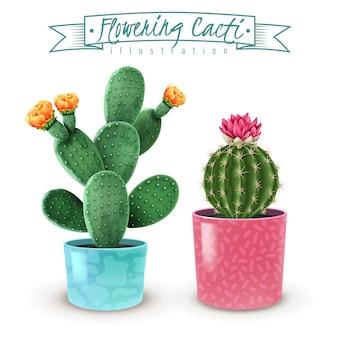 Realistischer satz der blühenden kakteen von 2 populären zimmerpflanzensorten in der bunten dekorativen topfnahaufnahme