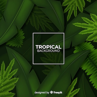 Realistischer tropischer hintergrund
