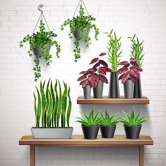 Realistischer weißer backsteinmauerinnenraum der zimmerpflanzen mit hängenden efeutopfsucculents auf seitentabelle