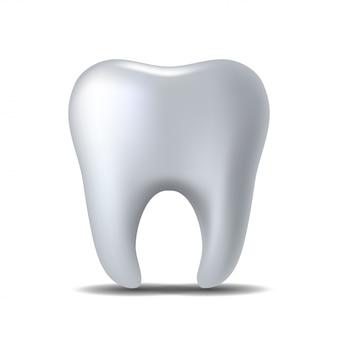 Realistischer weißer zahn lokalisiert auf weißem hintergrund