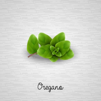 Realistisches frisches grünes oregano