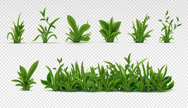Realistisches grünes gras. 3d frische frühlingspflanzen, verschiedene kräuter und büsche