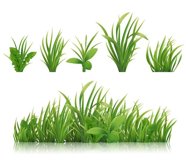 Realistisches grünes gras frühlingskräuter und büsche