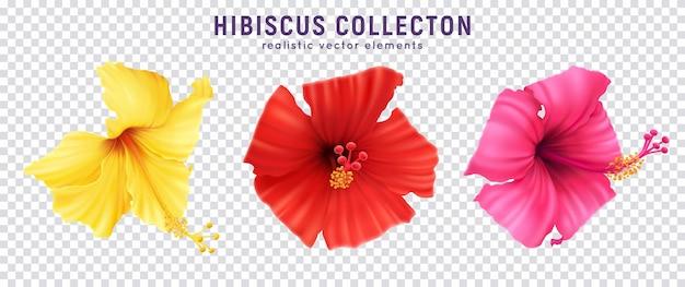 Realistisches hibiskus-set