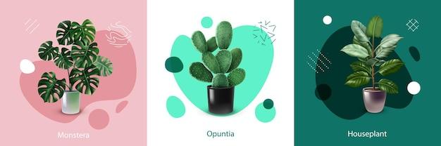 Realistisches konzept mit verschiedenen beschrifteten zimmerpflanzen in töpfen