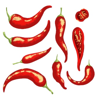 Red hot chili pfeffer. isolierte illustration.