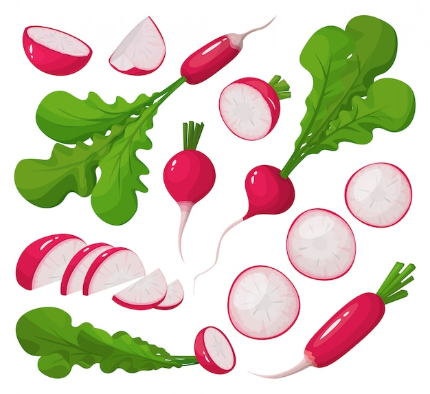 Red radieschen cartoon set symbol. illustrationsgemüse auf weißem hintergrund. isolierter karikatursatz symbolroter rettich.