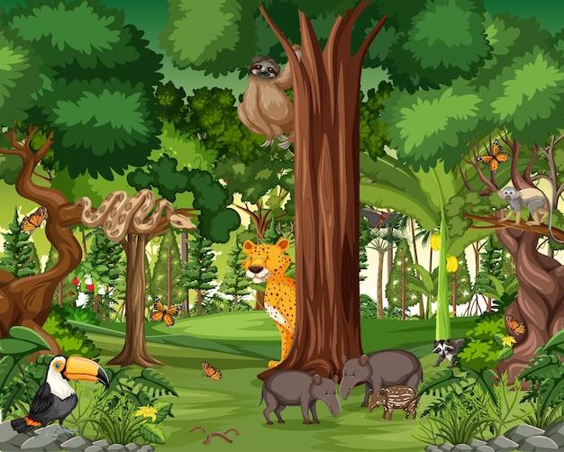 Regenwaldszene mit wilden tieren Kostenlosen Vektoren
