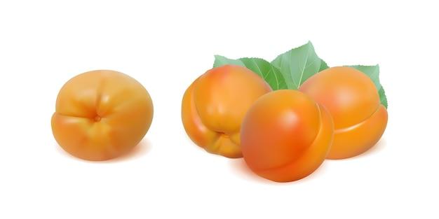 Reife aprikosen mit blättern lokalisiert auf weißem hintergrund