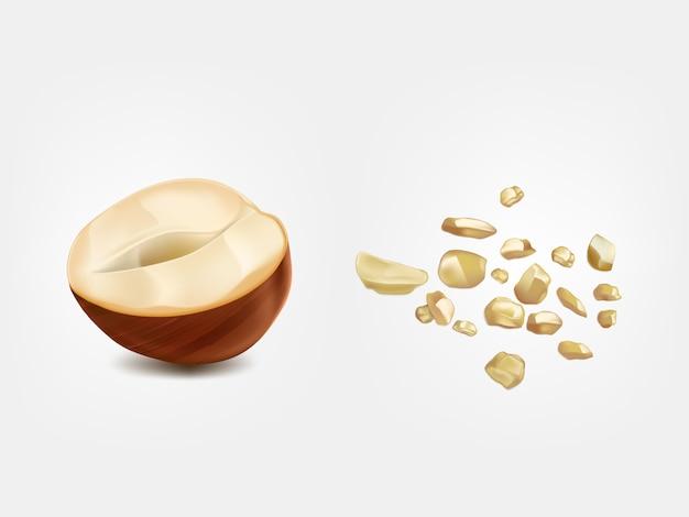 Reife und rohe halbe haselnuss, vorderansicht der erdnuss
