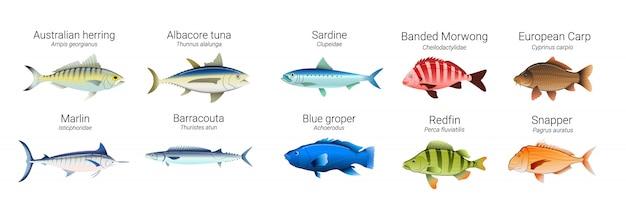 Reihe von australischen fischsorten
