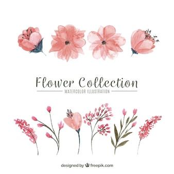 Reihe von Blumen