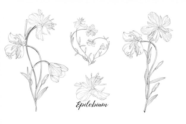 Reihe von floralen elementen epilobium