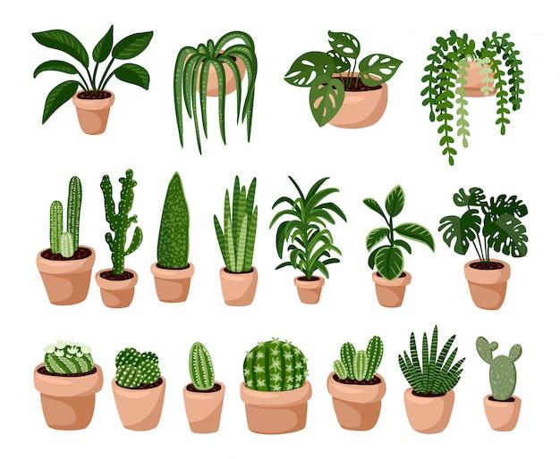 Reihe von hygge topfpflanzen sukkulenten, gemütliche lagom skandinavischen stil sammlung