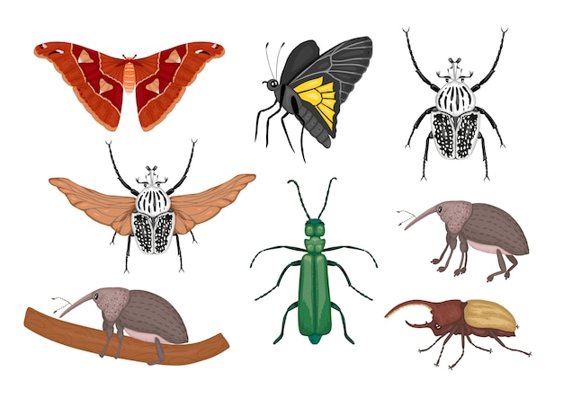 Reihe von tropischen insekten. übergeben sie gezogene farbige atlasmotte, rüsselkäfer, schmetterling, goliath, herkules-käfer, spanische fliege. bunte nette sammlung tropische wanzen.