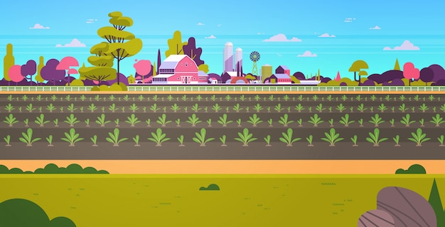 Reihen junge frisch gekeimte pflanzen gemüseplantage landwirtschaft und landwirtschaft konzept ackerland feld landschaft landschaft hintergrund flach horizontal
