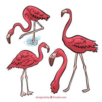 Reizender satz hand gezeichnete flamingos