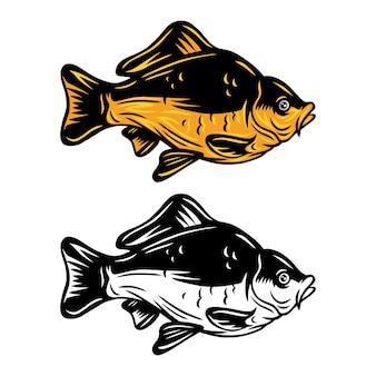 Retro- lokalisierte illustration der weinlesekarpfenfische auf einem weißen hintergrund.