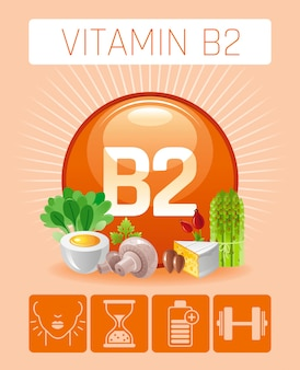 Riboflavin vitamin b2-reiche lebensmittelikonen mit menschlichem nutzen. flaches icon-set für gesundes essen. diät infografik diagramm poster mit käse, ei, spargel, nuss.