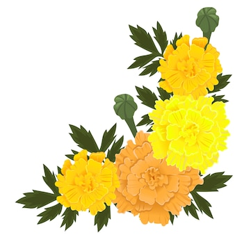 Ringelblumenblüten der gelben und orange farbe lokalisiert auf weißem hintergrund.