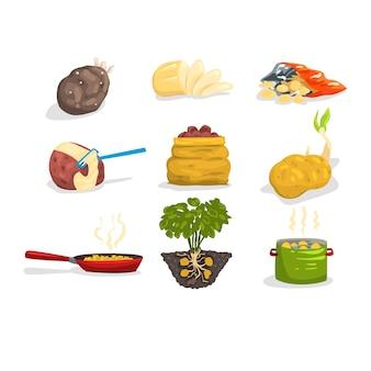 Rohe und gekochte kartoffeln illustrationen auf einem weißen hintergrund