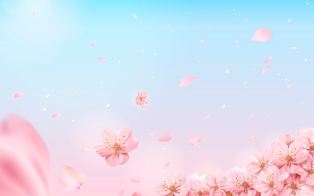 Romantischer kirschblütenhintergrund, fliegende blumen auf rosa und blauem hintergrund in der illustration