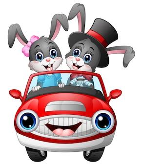 Romantisches paarkarikaturkaninchen, das ein auto fährt