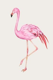 Rosa flamingo-vintage-vektor von hand gezeichnet