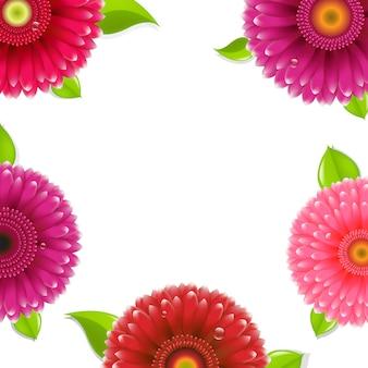 Rosa gerber mit farbverlaufsgitter