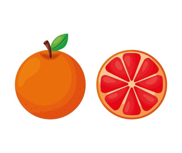 Rosa grapefruit-fruchtvektor