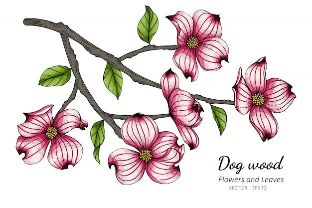 Rosa hartriegelblumen- und blattzeichnungsillustration mit strichzeichnungen auf weißem hintergrund.