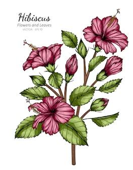 Rosa hibiskusblumen- und blattzeichnungsillustration mit strichzeichnungen auf weiß.