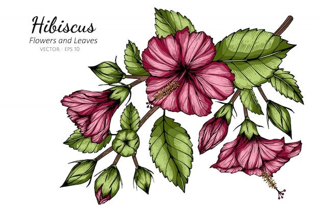Rosa hibiskusblumen- und blattzeichnungsillustration mit strichzeichnungen auf weißem hintergrund.