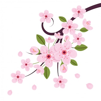 Rosa kirschblüte-blume