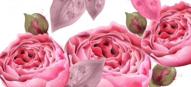 Rosa rosen aquarell hintergrund