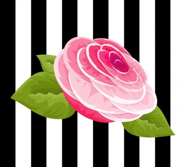 Rosa rosen und knospen.