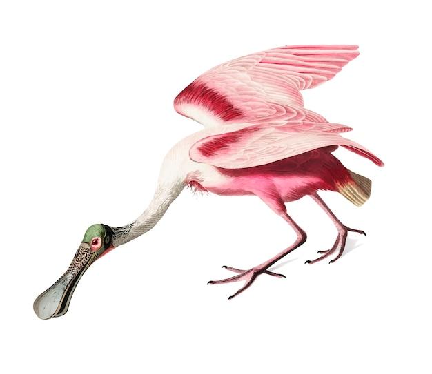 Rosa spoonbill abbildung