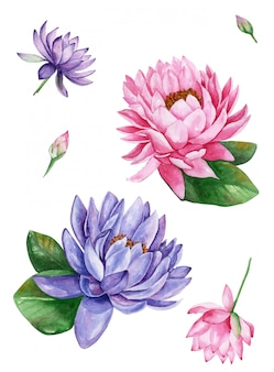 Rosa und lila seerosenlotusblume, aquarellillustration