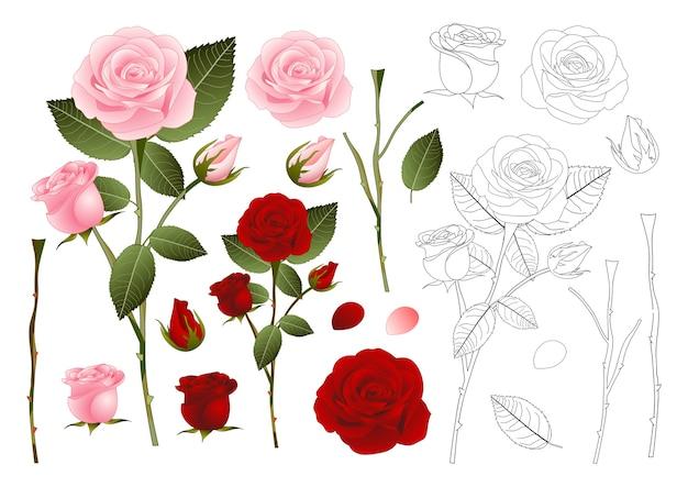 Rosa und rote rose gliederung