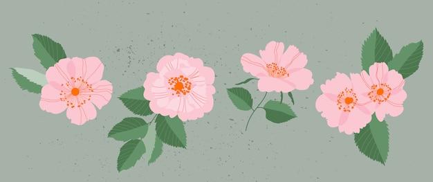 Rosa wilde rosen gesetzt. elegante weibliche blütenköpfe und blätter isolierte illustrationen.