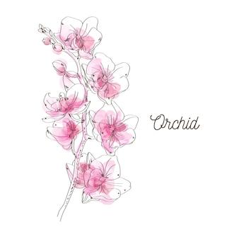 Rosafarbene orchideenabbildung auf weißem hintergrund