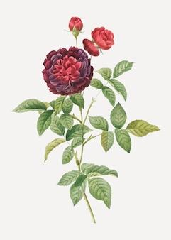 Rosafarbener vektor des blühenden guerins der weinlese