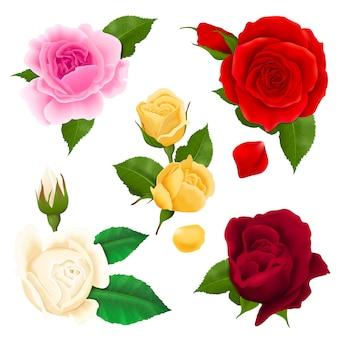 Rose blüht realistischen satz mit verschiedenen farben und formen lokalisiert