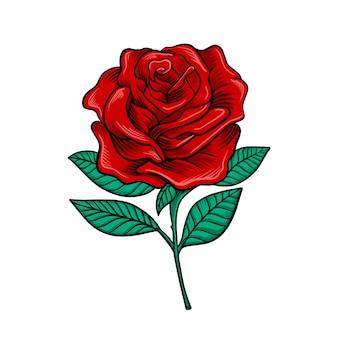 Rose blumenvektor