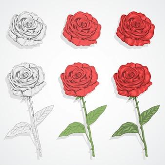Rose flower vector set