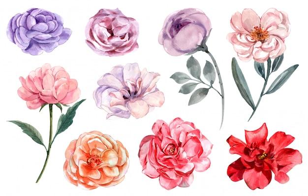 Rose in verschiedenen farben eingestellt
