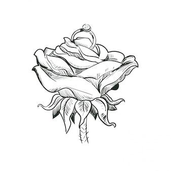 Rose mit ehering isolierte skizze.