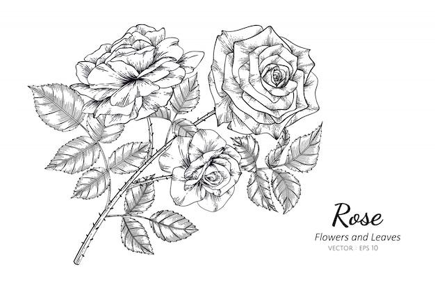 Rosen-blumenzeichnungsillustration mit linie kunst auf weißen hintergründen.