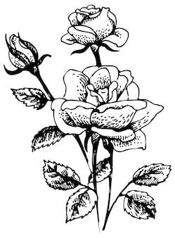 Rosen. handgezeichnete illustration des rosenblumenstraußes